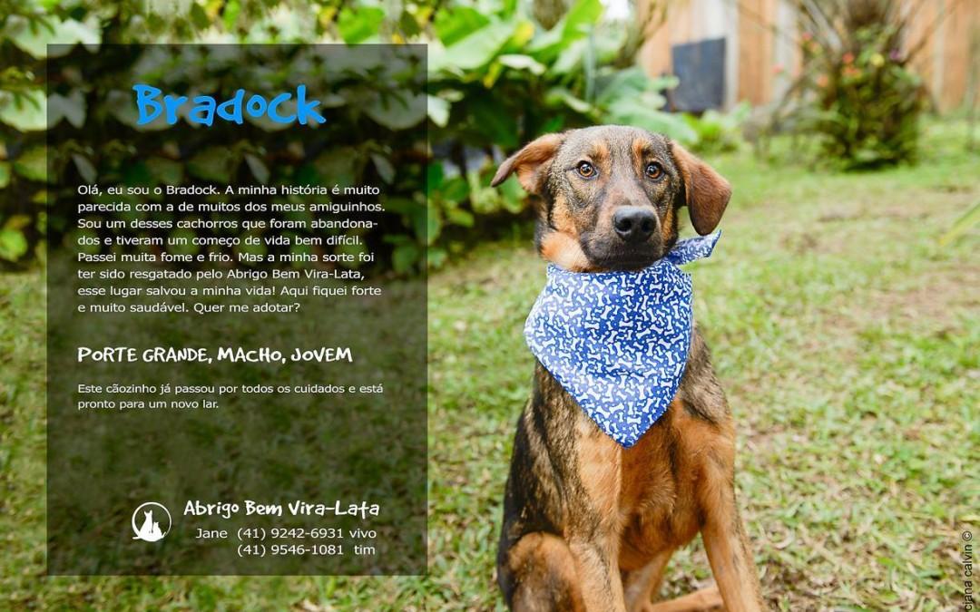 Bradock